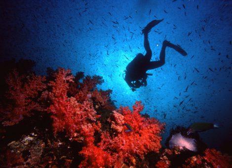 Архипелаг Аданг на границе Таиланда и Малайзии часто называют «тайскими Мальдивами» за белоснежный песок. Ко Аданг один из множества островов этого архипелага.