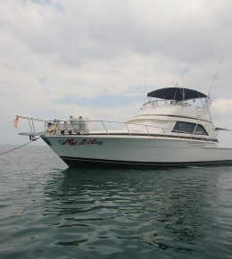 «My Lily» motor yacht